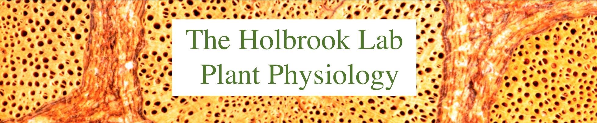 The Holbrook Group
